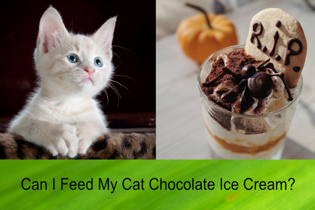Can I Feed My Cat Chocolate Ice Cream?
