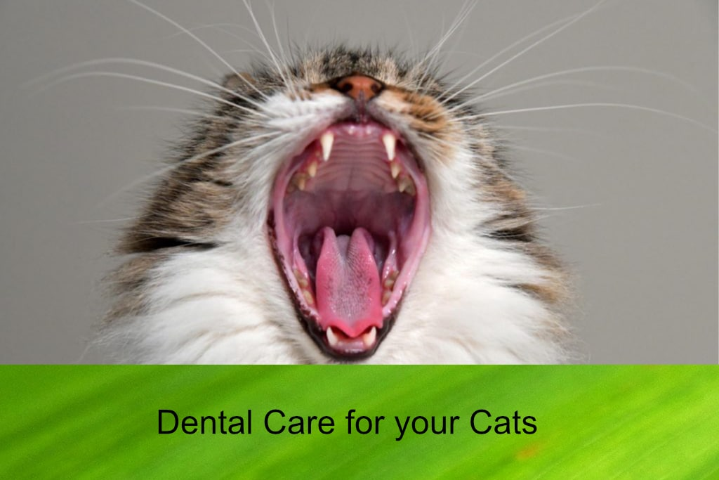 Dental Care for your Cats