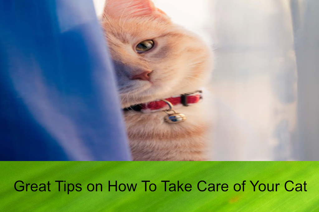 Great Tips on How To Take Care of Your Cat