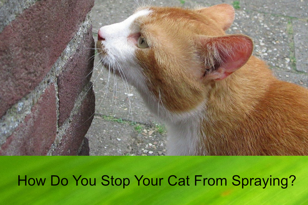 How Do You Stop Your Cat From Spraying?