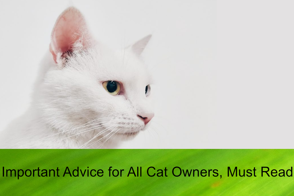 Important Advice for All Cat Owners, Must Read!