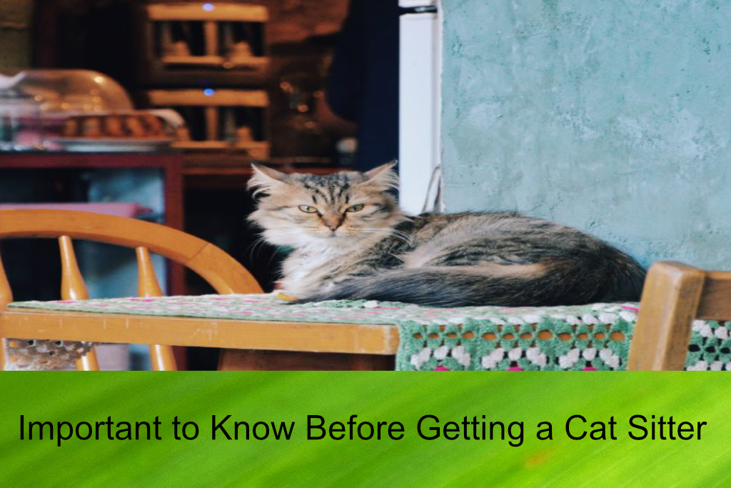 Important to Know Before Getting a Cat Sitter