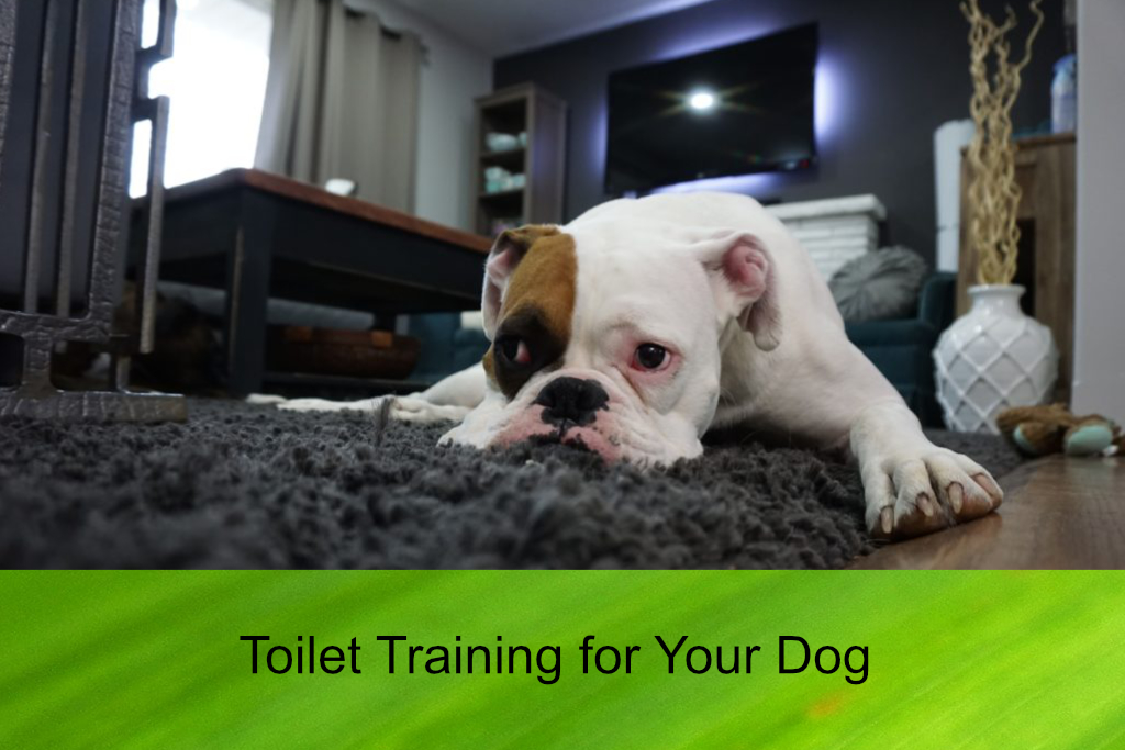 Toilet Training for Your Dog
