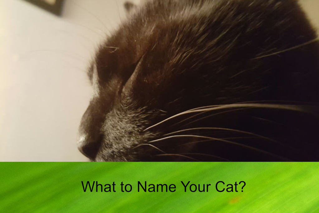 What to Name Your Cat?