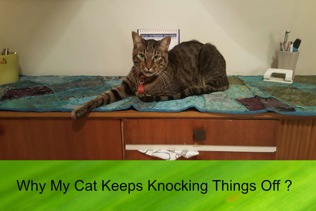 Why My Cat Keeps Knocking Things Off The Table?