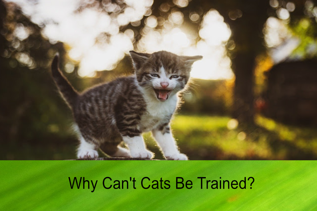 why can't cats be trained