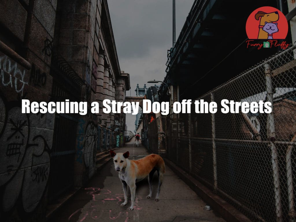 Rescuing a Stray Dog off the Streets