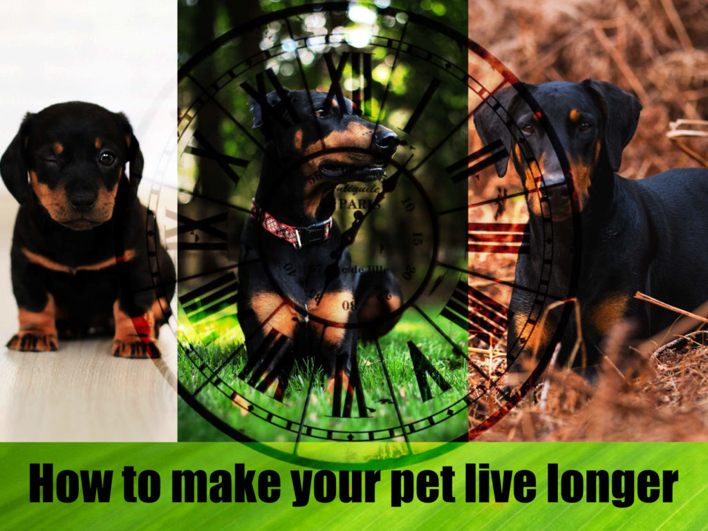 How to make your pet live longer