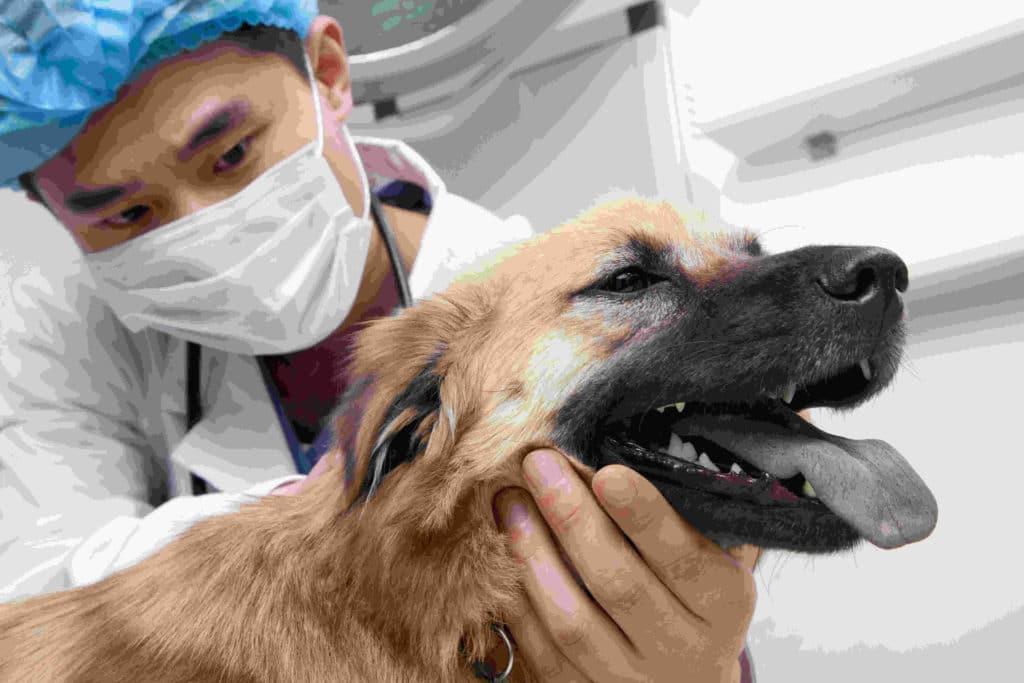 Rescue a dog, steps to take, vet