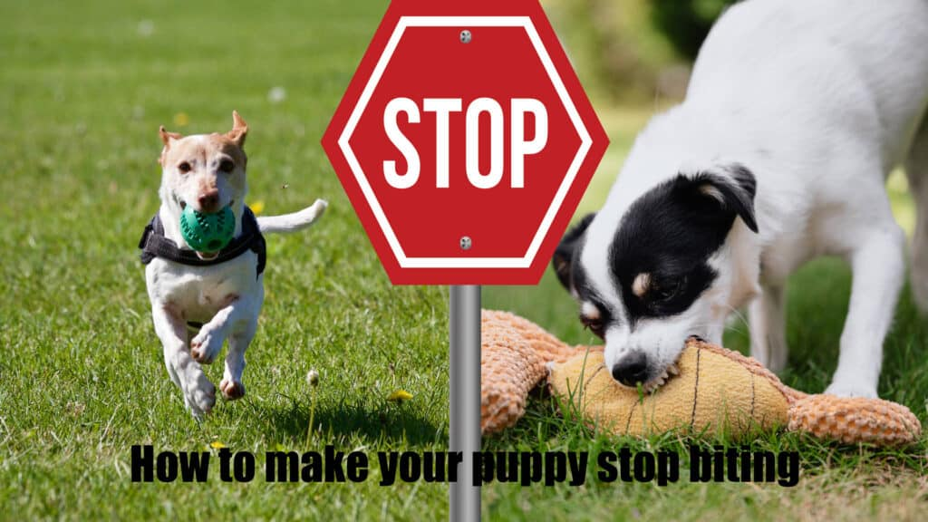 How to make your puppy stop biting 1