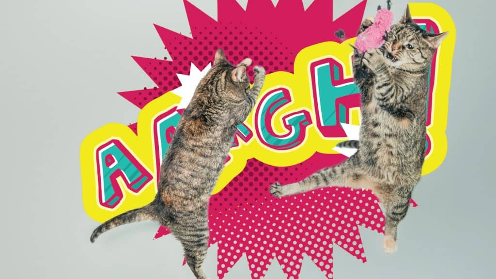 how to stop aggression in cats 2