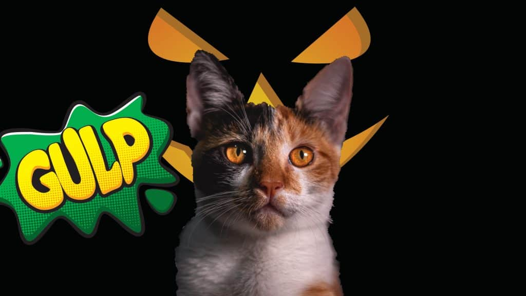 how to stop aggression in cats 3