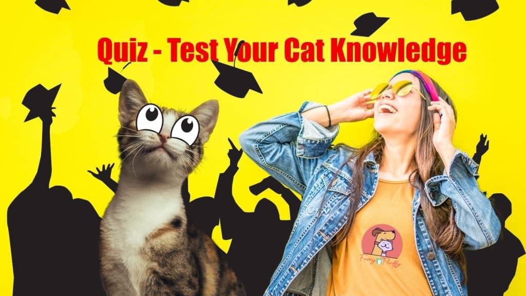 Quiz Test your cat knowledge